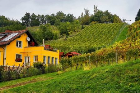 A small vineyard in the Steiermark